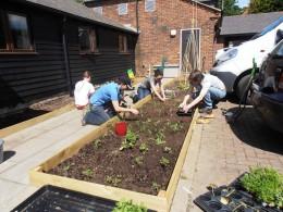 Kitchen garden planting